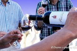 Albufeira se convierte en la capital del vino