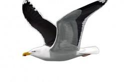 Atlas de las Aves Marinas de Portugal