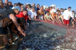 Los Aperitivos del Pescador llenan Quarteira de tradición, gastronomía y música