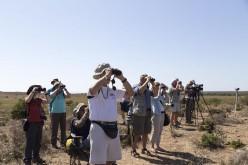 Sagres se sumerge en su Festival de Observación de Aves