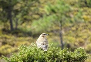 migracion-aves1