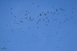 La belleza de la migración de aves en Sagres