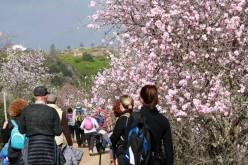 De ruta por los almendros en flor del Algarve