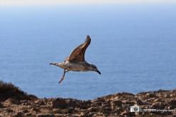 Guía de Observación de Aves en el Algarve