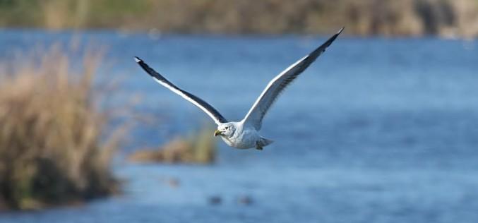 Una mirada a las aves del Algarve
