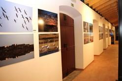 Una muestra de fotografía revela la belleza de la 'Vida en Sapal'