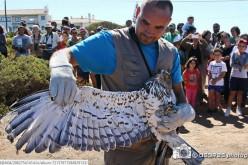 Más de 200 animales vuelven a la naturaleza este verano gracias a RIAS