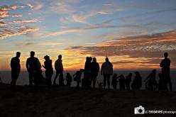 Más de 200 actividades en el Festival de Observación de Aves de Sagres