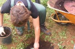 Loulé celebra el Día del Bosque Autóctono