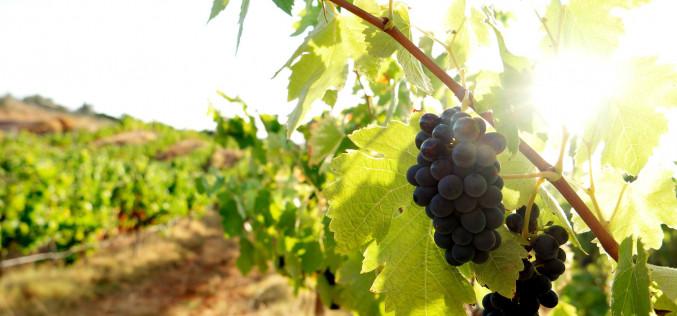El mejor vino del Algarve, en Lagoa
