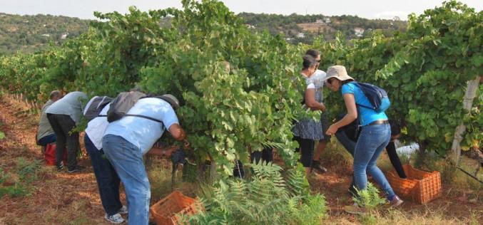 El vino, protagonista del final del verano en Loulé