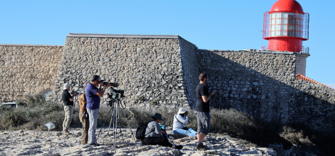 El Festival de Observación de Aves llega a los cuatro rincones del mundo