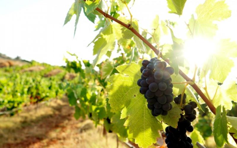 Dos vinos de Lagoa se hacen de oro
