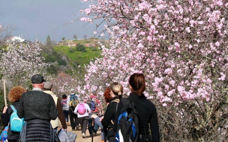 Passeios Pedestres te invitan a ver Almendros en Flor