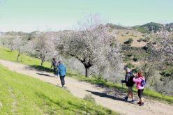 Almendros en Flor llevaron a más de 1000 personas a la sierra de algarvía