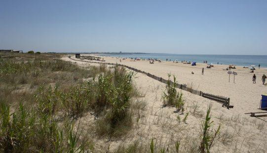 Cordão dunar da Meia Praia vai ser reabilitado