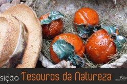 El Castillo de Silves acoge la exposición «Tesoros de la naturaleza»