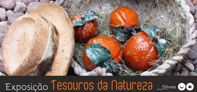 """Castelo de Silves acolhe exposição """"Tesouros da Natureza"""""""