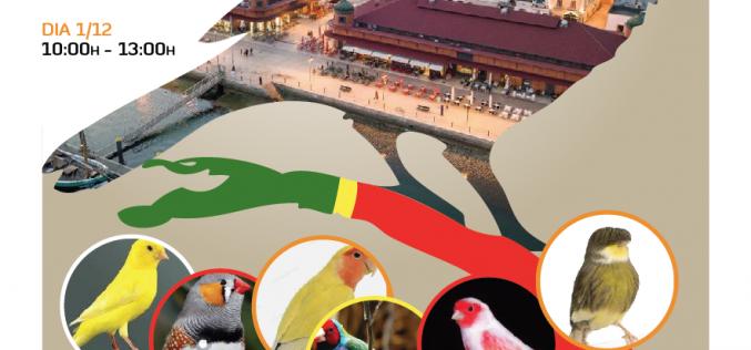 ExpoAve traz 3.º Interclubes à zona ribeirinha da cidade de Olhão