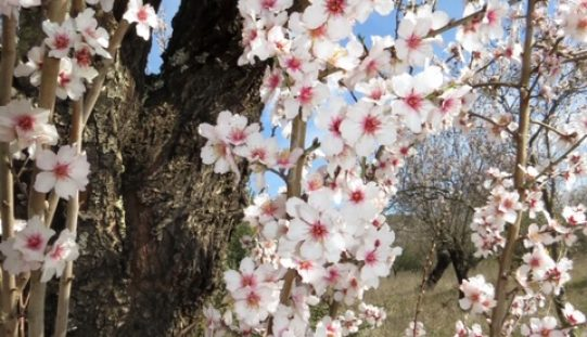 Loulé Creativo propone tours entre flores y recetas de almendras