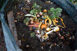 Silves aprueba la financiación para el compostaje y la recogida selectiva de biorresiduos