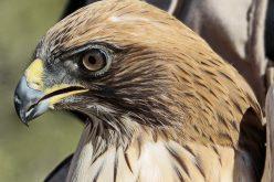 El evento de naturaleza más grande del país está de regreso en Sagres