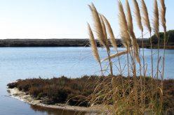Águas de Portugal integra el Proyecto para el tratamiento de aguas