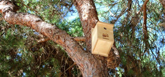 Castro Marim instala cajas nido para promover la avifauna
