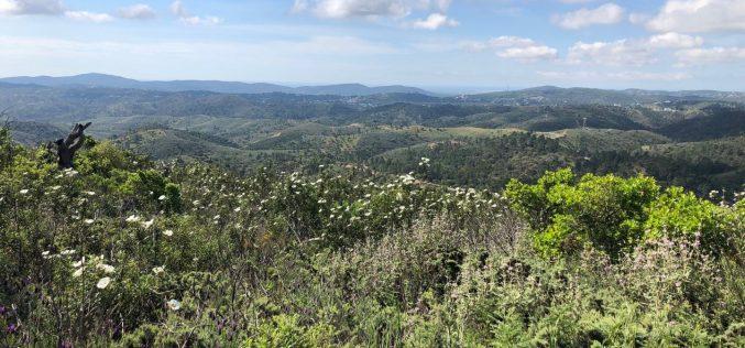 São Brás de Alportel inaugura concurso público de obras forestales preventivas